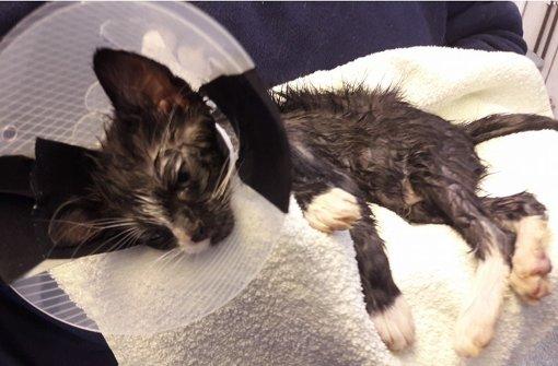 Baby-Katze überlebt Klebstoff-Angriff