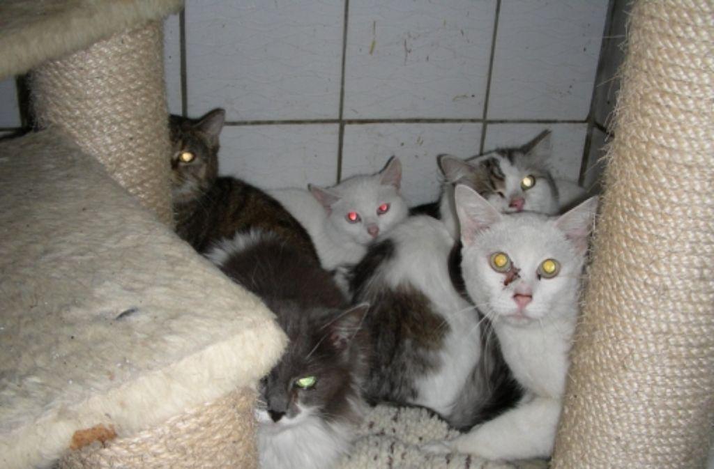 Im September sind diese Katzen aus einer Miniwohnung in Geislingen gerettet worden. Jetzt fand das Veterinäramt bei der Frau schon wieder fünf Tiere. Foto: privat