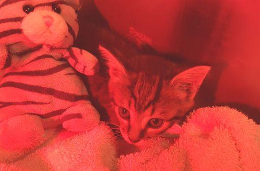 Feuerwehr rettet kleine Katze aus Kanalrohr