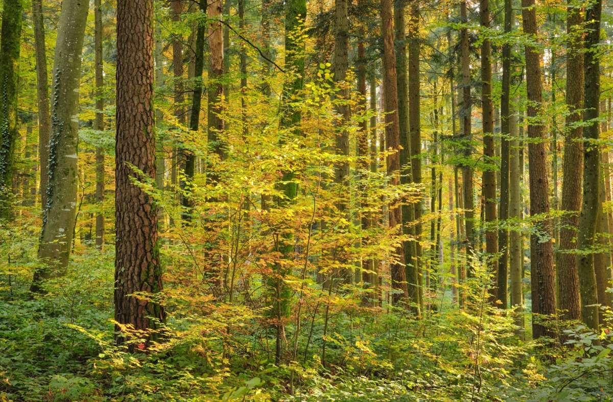 Neue Stimmen aus dem Wald der Dichtung. Foto: imago images/blickwinkel/P. Frischknecht via www.imago-images.de
