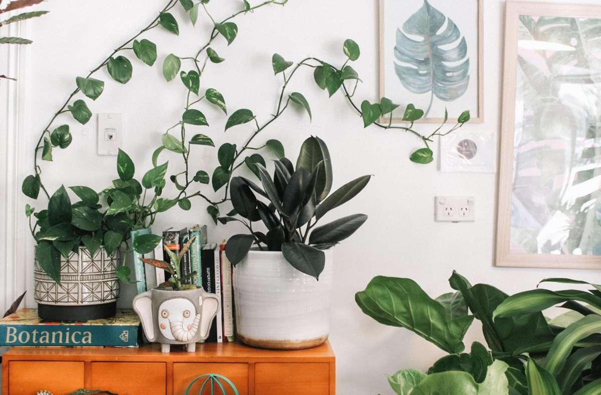 Vielleicht ist diese Krise auch die Hochzeit der Zimmerpflanzen, denn mit ihnen kann man sich ein wenig Außenwelt in die Wohnung holen und für grüne Akzente sorgen. Foto: Unsplash/Prudence Earl