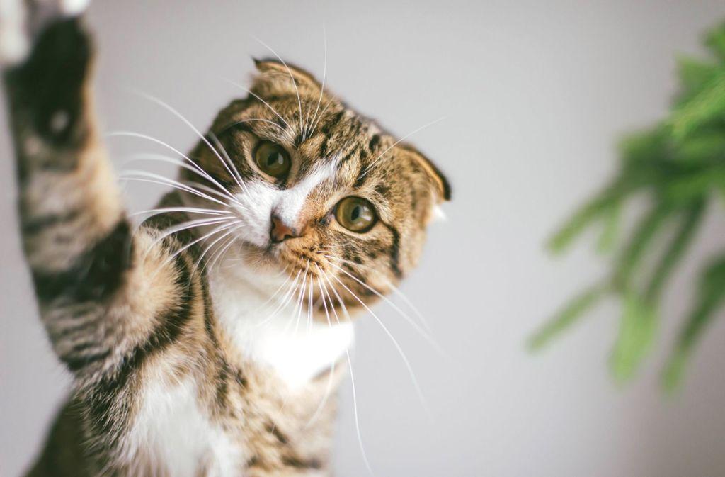 Ein Lkw-Fahrer fand zahlreiche tote Katzen auf der Straße. (Symbolbild) Foto: imago images/Cavan Images