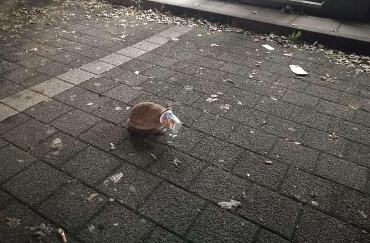 Der Igel kurz vor seiner Befreiung. Foto: Polizei