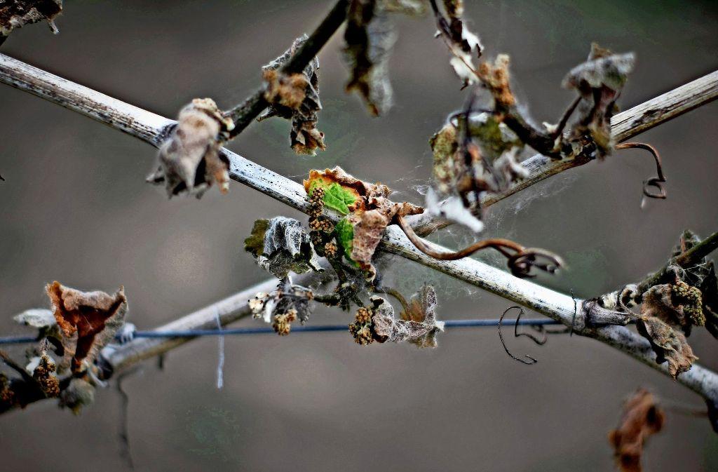 Vor allem  Weinreben sind  zerstört  worden. Foto: dpa