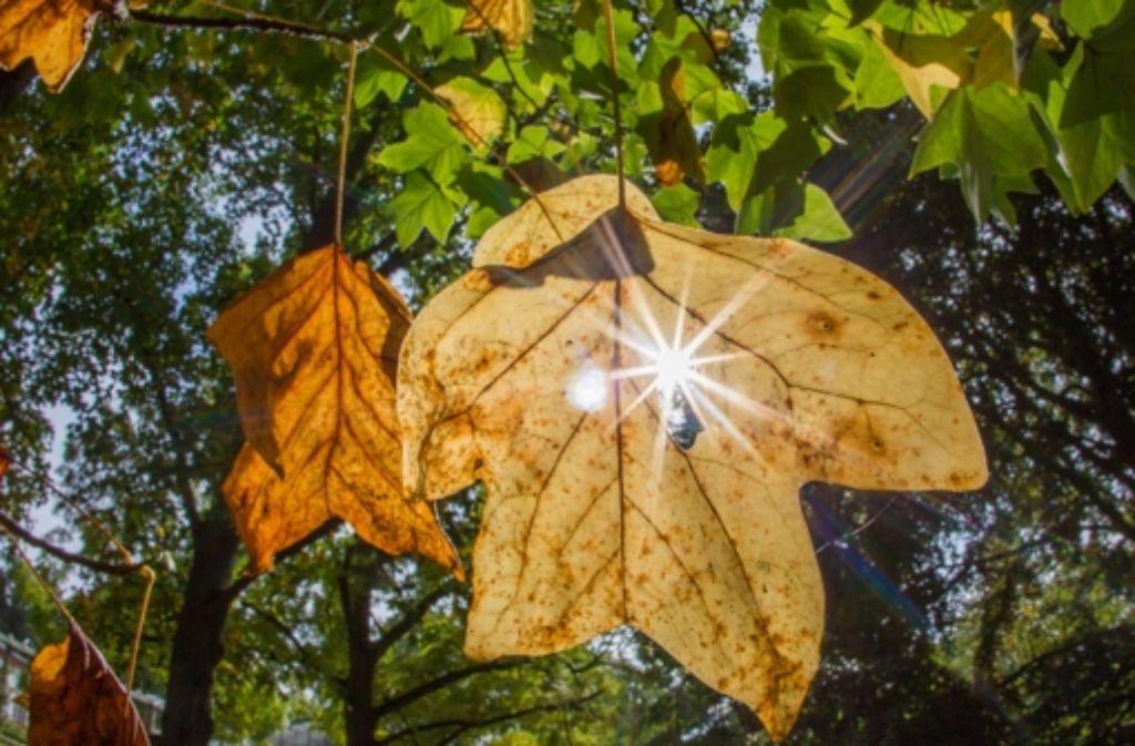 Der Herbst inspiriert manches Familienoberhaupt zu Reim und  Vers. Foto: dpa