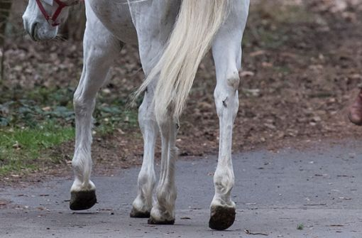 Hund jagt Pferd auf die Autobahn