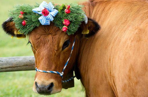 Österreich reagiert nach tödlichen Kuh-Attacken