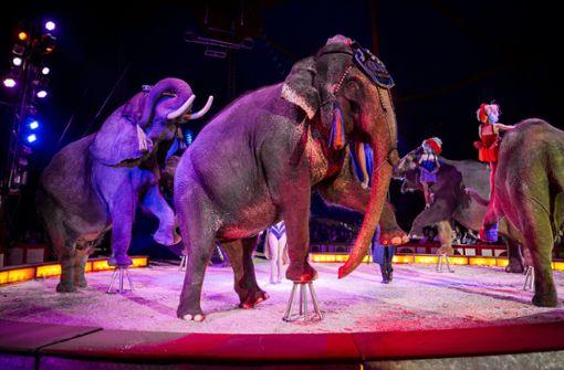 Zirkus darf Wildtiere vorführen - Ulm legt Beschwerde ein