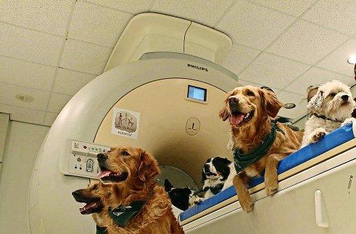 Hunde achten auf den richtigen Ton