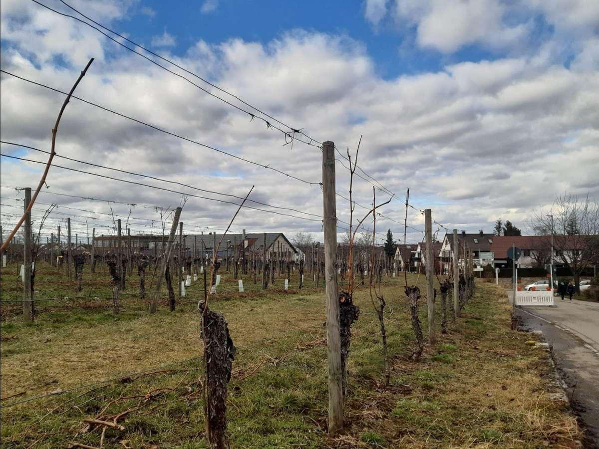 Fellbach hat seinen Ursprung unverkennbar im Weinbau. Foto: Sebastian Milpetz