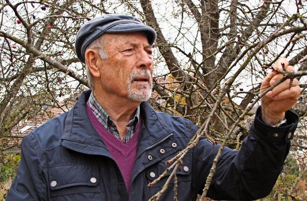 """Walter Hartmann hat das, was er selbst """"den Blick"""" nennt. Er erkennt Obstsorten allein an der Baumform. Foto: Judith A. Sägesser"""
