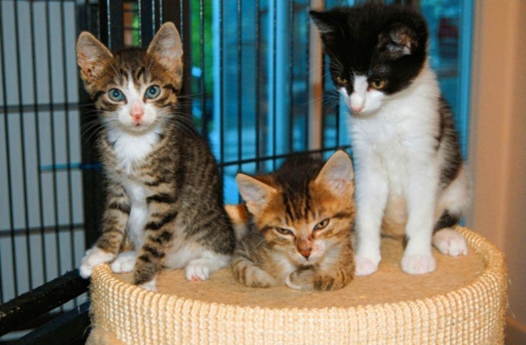 Die Katzenhilfe kümmert sich um verwilderte Tiere in und um Stuttgart. Foto: z