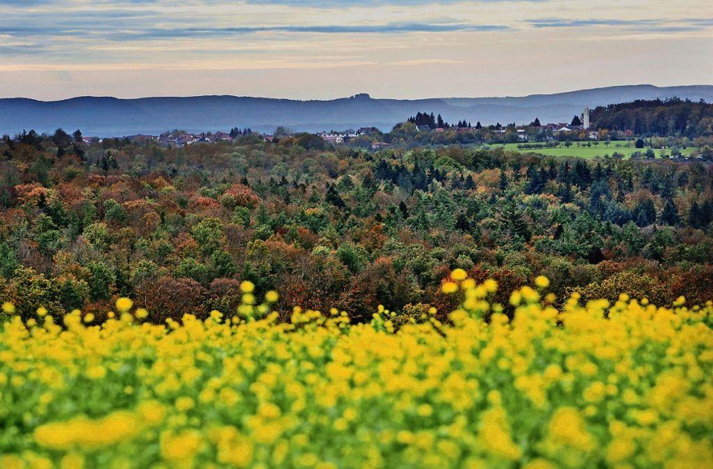 Der Schurwald dient auch den Erholungssuchenden. Prächtige Laubwälder geben den Blick auf die Schwäbische Alb und die Burg Hohenneuffen frei. Foto: Rudel- Regenscheit