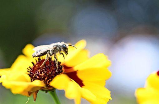 Blühende Wiesen für Vögel und Insekten
