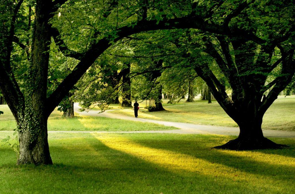 Luz hat den alten Rosensteinpark in Bad Cannstatt in das grüne Band zwischen dem Killesberg und dem Schlossgarten Foto: factum