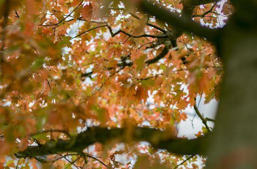 So schön ist der Herbst in Stuttgart