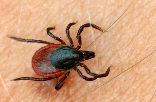 Was Sie über Zeckenbisse und übertragbare Krankheiten wissen müssen