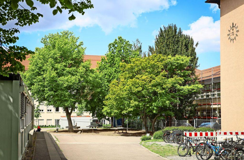 Grüner Hof: Die Bäume bleiben den  Goethe-Schülern erhalten. Foto: factum/