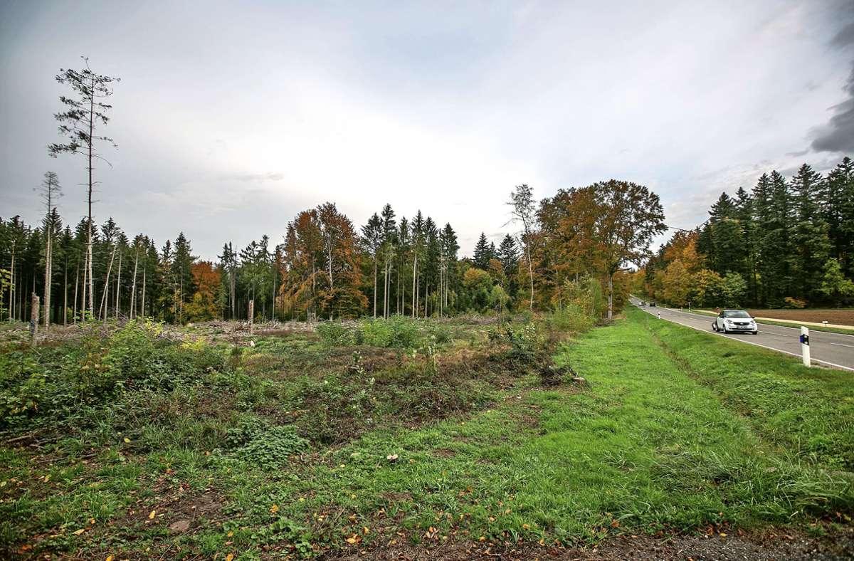 Das Waldstück an der Hauptstraße wird demnächst umzäunt und im kommenden Frühjahr bepflanzt. Foto: Roberto Bulgrin