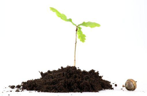 Filderstädterin setzt sich für mehr Baumpflanzungen ein