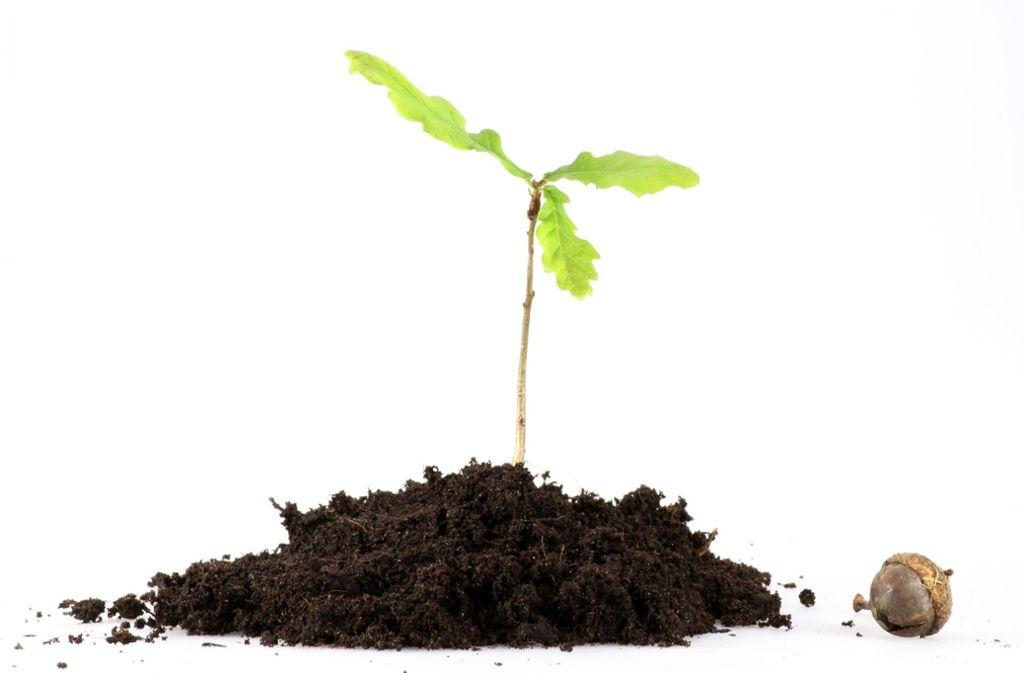 Mehr Bäume pflanzen fürs Klima – das will Saskia Heinen mit ihrer Facebook-Aktion erreichen. Foto: B. Wylezich - Fotolia