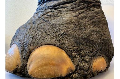 Zoll entdeckt Elefantenfuß-Hocker