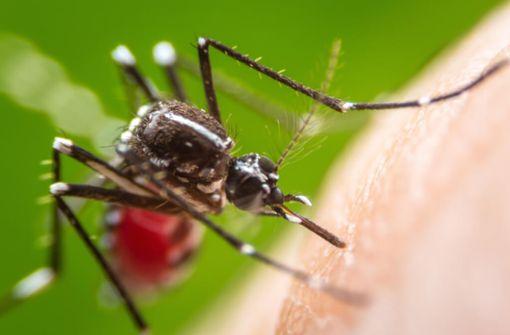So vertreiben Sie wirkungsvoll Mücken und Schnaken. Die besten 10 Hausmittel gegen Stechmücken im Artikel.