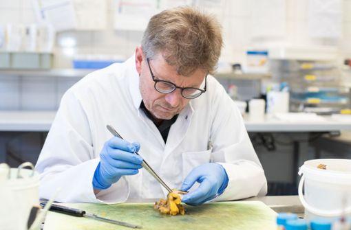 Pathologe: Angehörige befürworten vermehrt Obduktion von Corona-Toten