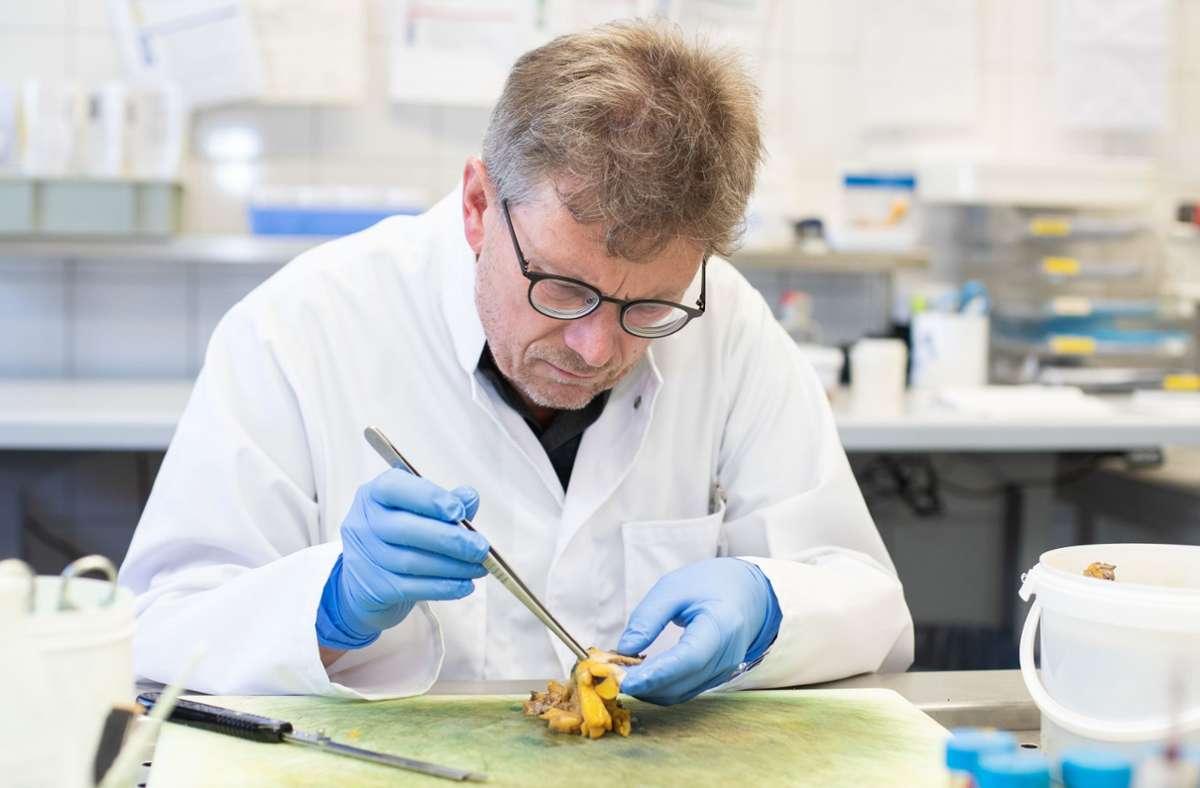 Hans Bösmüller arbeitet in einem Labor in der Pathologie der Uniklinik Tübingen. (Archivbild) Foto: dpa/Tom Weller