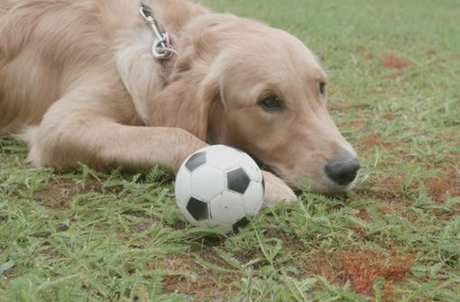 Hund Poldi tippt das Spiel Deutschland gegen Schweden