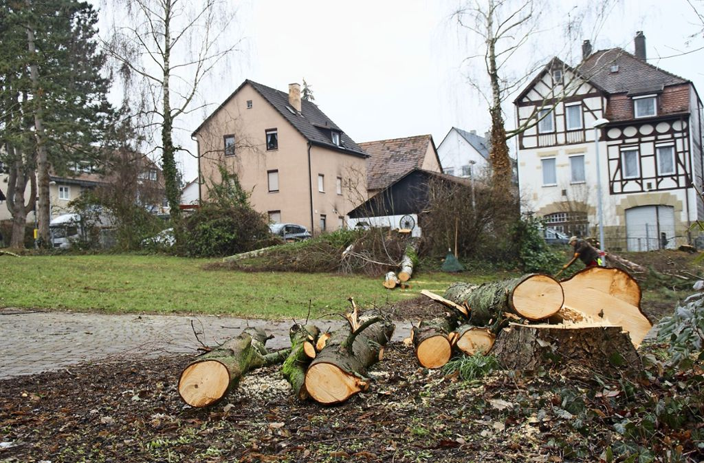 Am Kelterplatz wurden für die Umgestaltung erste Bäume gerodet. Foto: Bürgerverein Hofen (z)