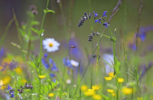 Insekten mögen hohe Halme