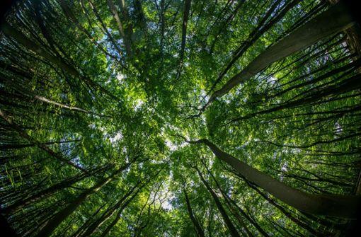 Wie gut kennen Sie sich im Wald aus?