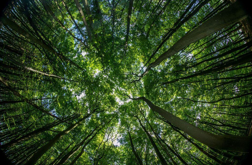 Der Tag des Baumes soll die Bedeutung des Waldes für den Menschen unterstreichen. Foto: dpa