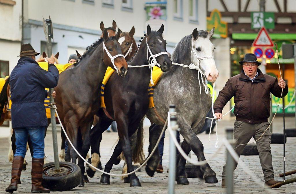 Den  Hut gezogen  hat so mancher     Besucher angesichts  der Schönheit und des guten Pflegezustandes der Pferde von  Robert Maier aus Riedlingen. Foto: factum/Granville