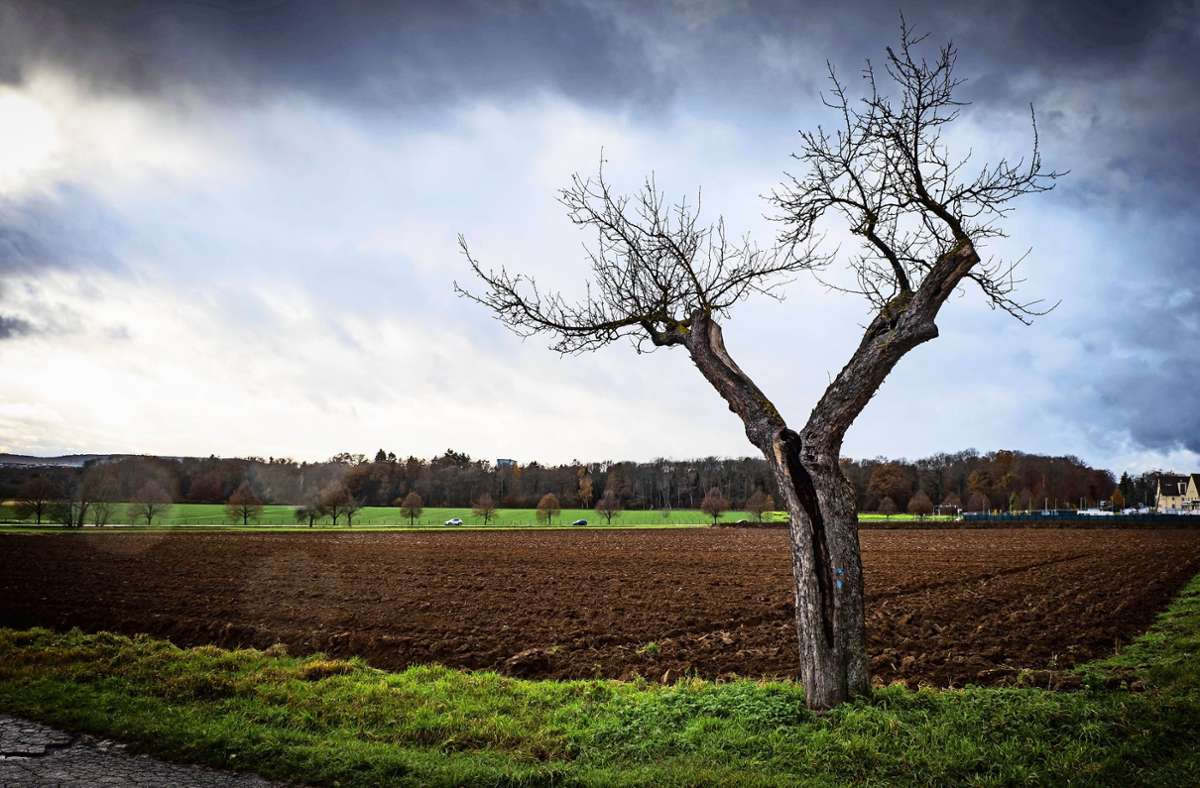Landwirtschaftlich genutzte Böden (hier auf dem Birkacher Feld) hält Willfried Nobel für besonders schützenswert. Zuweilen eckt er damit an. Foto: Lichtgut/Achim Zweygarth