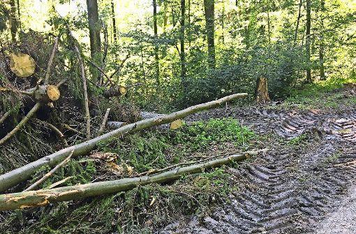 Bäume werden wegen Borkenkäferbefall abgeholzt