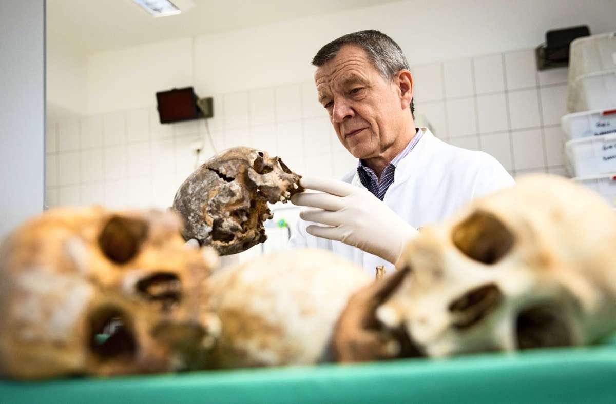 Klaus Püschel, Leiter des Instituts für Rechtsmedizin am Universitätsklinikum Hamburg-Eppendorf, betrachtet im Anthropologischen Labor des Instituts Schädel- und Knochenfunde. Foto: Christian Charisius/dpa