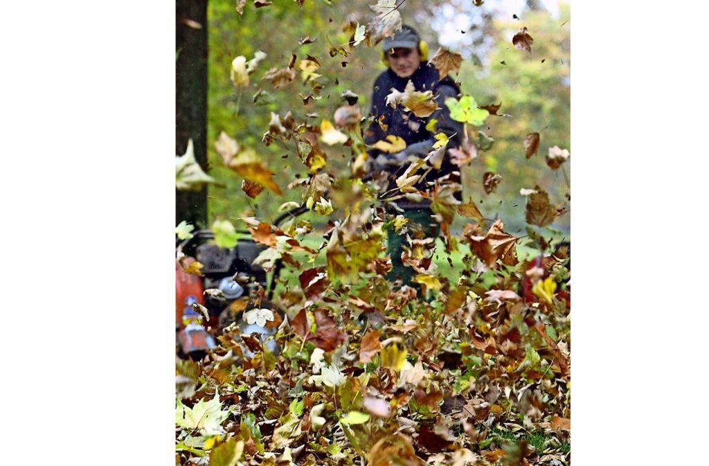 Herbstlaub gehört in die Biotonne. Foto: dpa