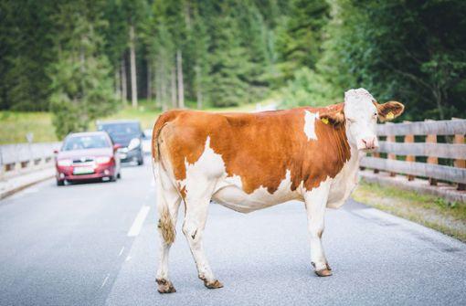 Jäger beendet achttägigen Ausflug von Kuh