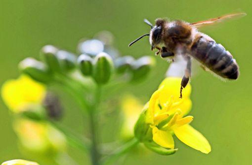 Bauern halten an Pestiziden fest