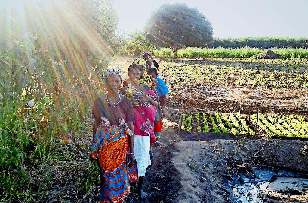 Aus einem nahen Fluss wird  das Gemüse bewässert: Frauen  in einem Dorf bei Nicolada  in Mosambik. Die Welthungerhilfe lehrte sie das  Anlegen der Reihenbeete Foto: Link