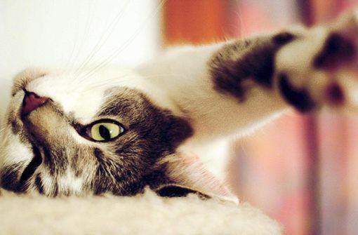 Machen Haustiere krank?