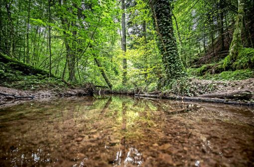 Durch den Dschungel zu den Baumriesen