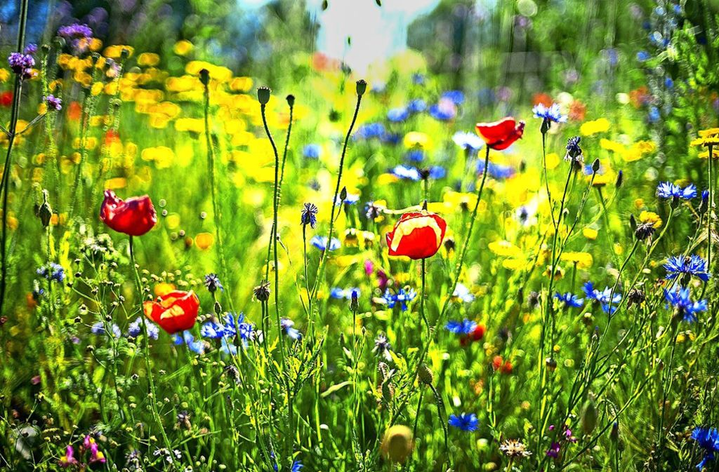 Martin Frischaufs Lieblingsbild aus seinem Band ist die Blühwiese. Foto: / Frischauf