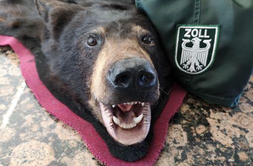 Zoll beschlagnahmt Bärenköpfe und Fell
