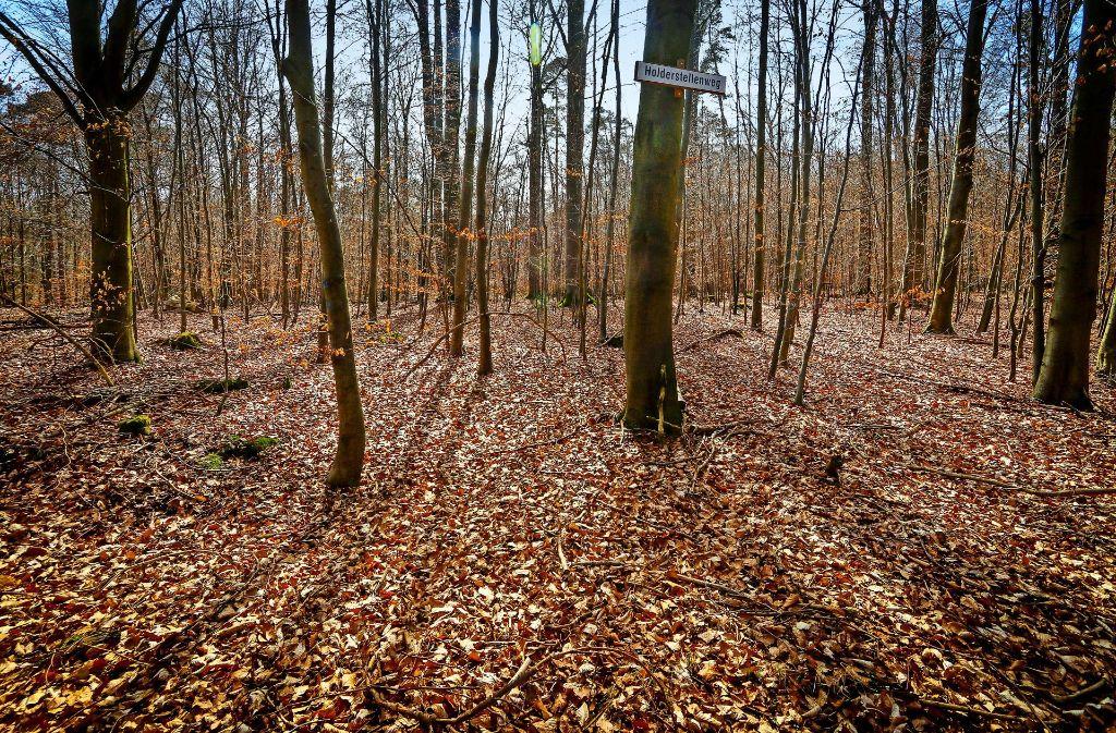 Gehörte zu den besten fünf als möglicher Deponiestandort: der Sindelfinger Stadtwald Foto: factum/Granville