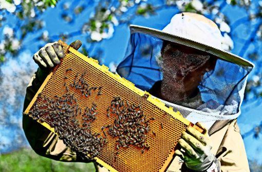 Gegen Bienenstöcke auf den Fellbacher Friedhöfen