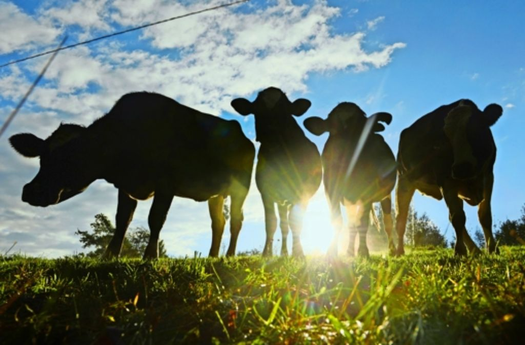 Die Kühe im Land sind mutmaßlich ziemlich glücklich. Foto: dpa