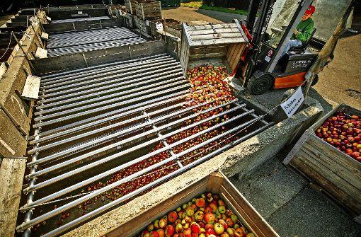 Den Mostern werden die Äpfel knapp